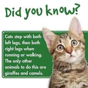 cat trivia 107 best fascinating facts and useful info images on
