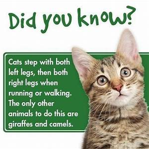 23 best Cat Facts images on Pinterest | Kitty cats ...