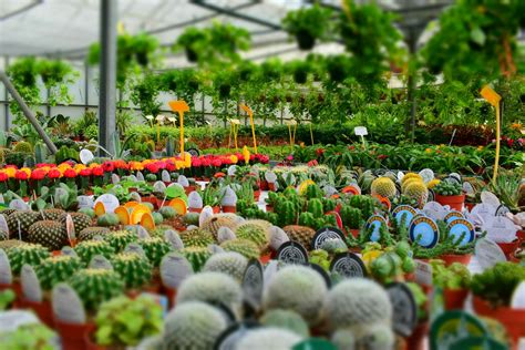 buy plants melbourne the best nurseries to buy plants in melbourne