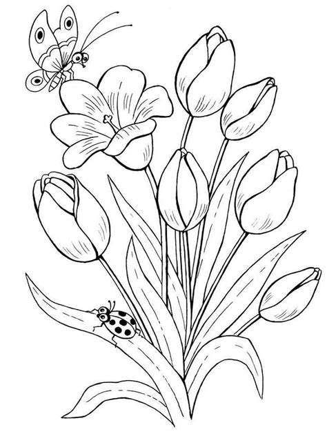 tulip coloring pages   print tulip coloring pages