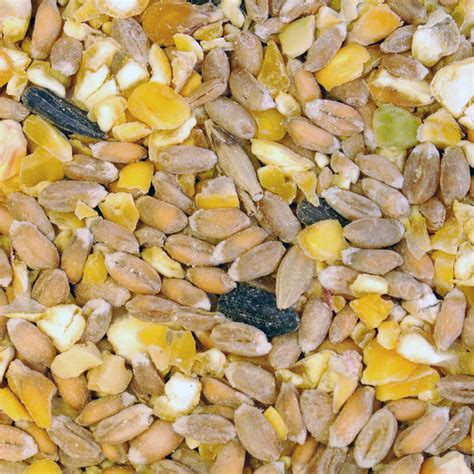 dr green wild bird food 1kg