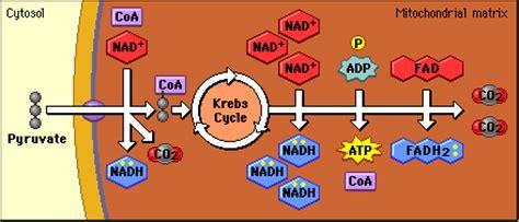 cellular process team bio  life