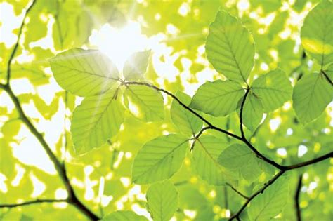 Leaf  Definition, Parts, & Function Britannicacom
