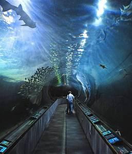 17 best Aquarium Tunnels images on Pinterest | Fish ...