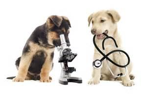 the animal clinic lucerne veterinary hospital preventative care archives