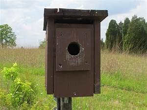 Blue Jay Barrens  Bird Box Nest Progress