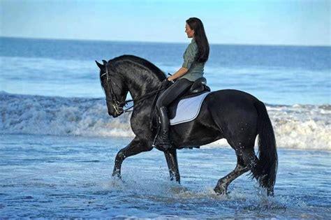 pin de         en cavalli caballos caballos