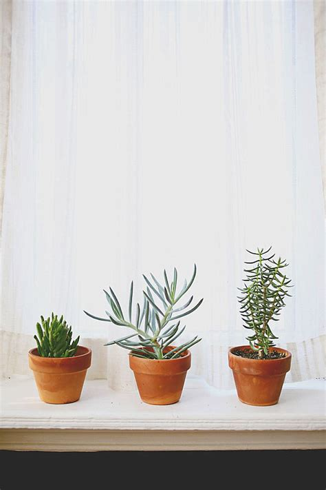 plants indoor potted succulents window interior houseplants windowsill popular succulent light plant care simple keeping learning sturdy easy kitchen garden