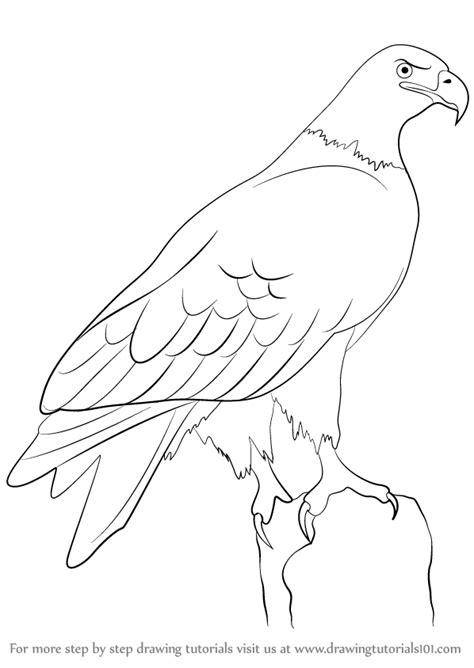 step  step   draw  eagle drawingtutorialscom