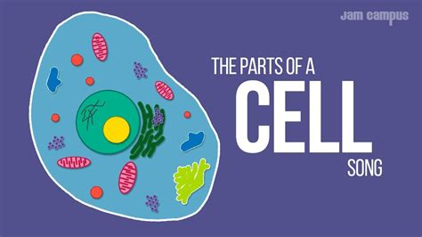 parts   cell song science  video youtube
