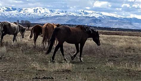 horses wild idaho territory bannock shoshone eastern comments