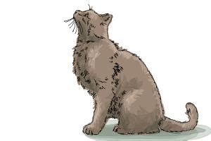 How To Draw A Cat Drawingnow