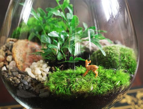 How To Create Amazing Terrariums That'll Green Up Your