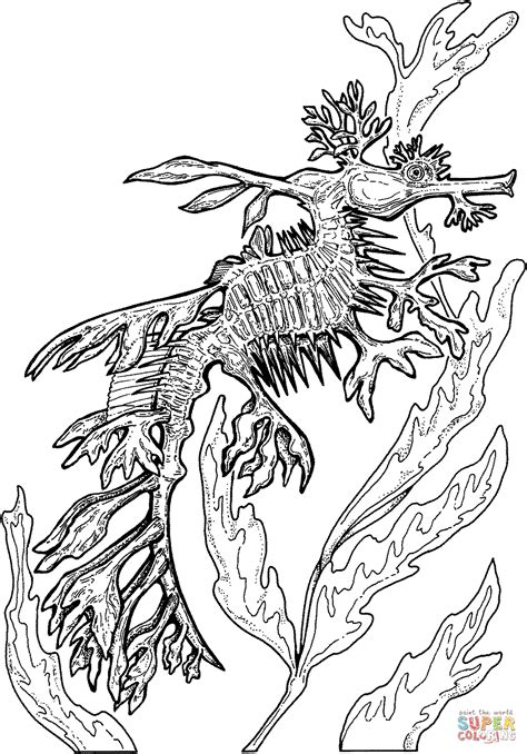 Sea Dragon Coloring Page Wwwpixsharkcom Images