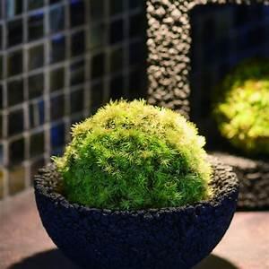 Eco Pochi Kokedama Moss Ball Pot - The Green Head