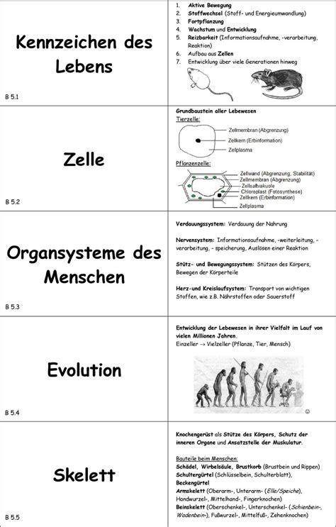 Arbeitsblatt organe des menschen