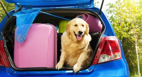 hundetransport auto rückbank hund im auto kombi bestens f 252 r hundetransport geeignet