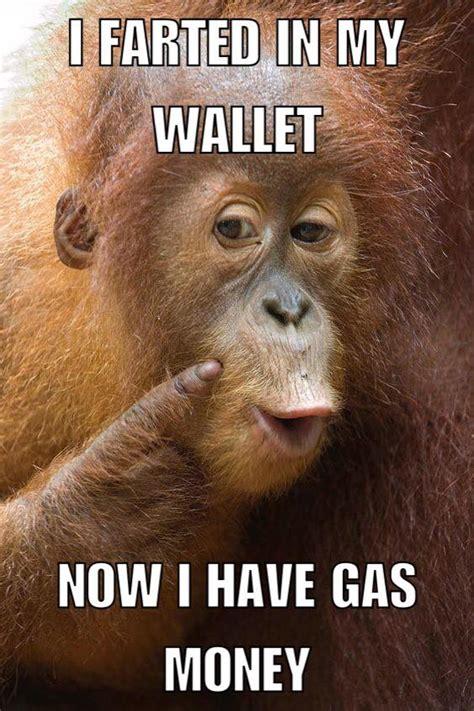 K Lol Meme - monkey s logic memes lol