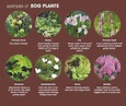 View All Plants View All Hardy Plants Amp Shrubs View All ...