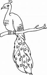 Peacock Coloring Pages Drawing Sheet Printable Animal Birds Perched Peacocks Bird Animals Lineart Easy Sheets Adult Supercoloring Grinch Clipart Getdrawings sketch template