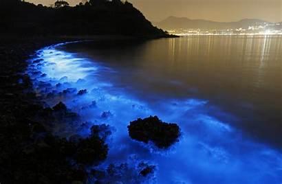 Bioluminescence Wallpapers Hq