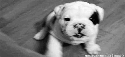 Puppy Gifs Paw Morning Pets Carnage Ir