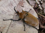 For every species of mammal, 300 arthropod species lurk in ...