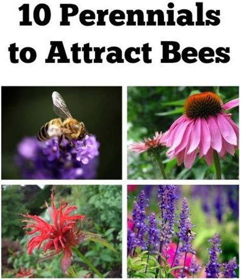 10 perennials to attract bees