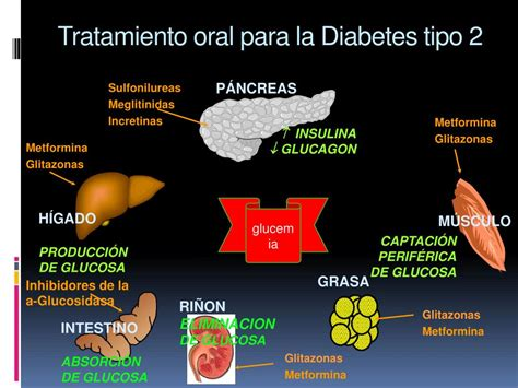 niveles de prevencion de la diabetes mellitus tipo