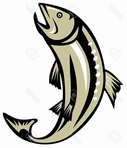 Salmon Clipart Fishing Trout Jumping Bass Largemouth