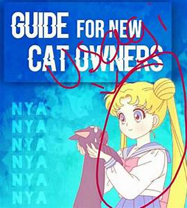 Guide For New Cat Owners