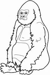 Gorilla Coloring Pages Clipart Cartoon Cliparts Gorillas Face Monkey River Sitting Down Elephant Craft Cool Printable Library Adult Sheets Clip sketch template