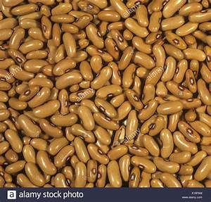 Green Or French Bean Seeds For Planting Stock Photo