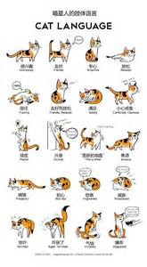 cat language cat language signals pictures to pin on