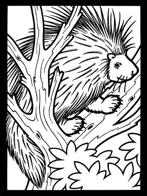 Printable Porcupine2 Animals Coloring Pages