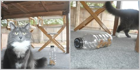 cat puzzle feeder one editor two diy cat feeder projects countless laughs