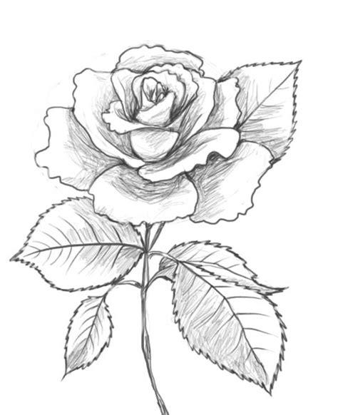 draw  rose drawing factory  samm whi