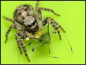 Se Débarrasser Des Araignées : les araign es mangent plus de viande que l humanit ~ Louise-bijoux.com Idées de Décoration