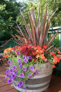 container plants ideas fall color container planting idea north coast gardening