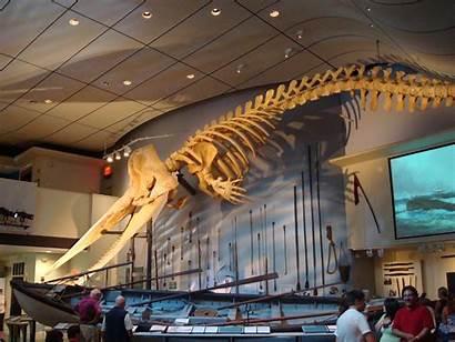 Nantucket Whaling Museum Whale Charm Weneedavacation Island
