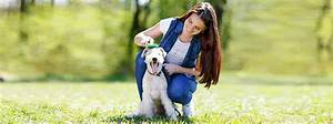 woman taking care of dog With dog day sitting