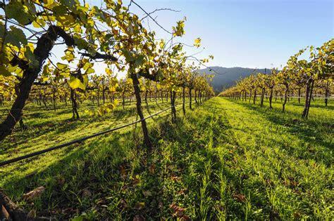 Frey Vineyards Hurt as California Burns WholeFoods Magazine