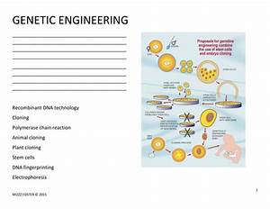 Genetic Engineering Worksheet And Answer Key By