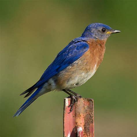 western north carolina birds identification