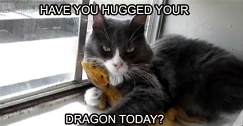 bearded dragon memes    smile animalpages