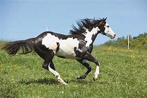Black And White Horse Related Keywords - Black And White ...