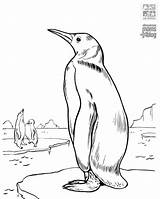 Coloring Penguin Chill Contest Albuquerque Pdf sketch template