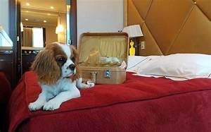 Hotel Pour Chien : chiens et chats l h tel un accueil vip en france ~ Nature-et-papiers.com Idées de Décoration