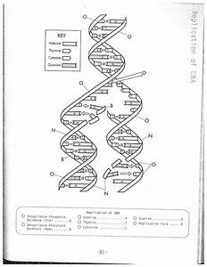 Dna Helix Drawing At Paintingvalley Explore Collection