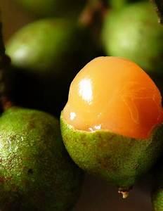 Bilí – Quenepa rum infusion | Gandido's Kitchen